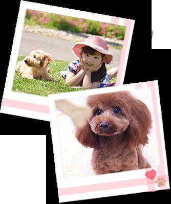 あなたは、どんな犬と暮したいですか?どんな犬に育ってほしいですか?