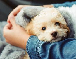 動物健康保険について