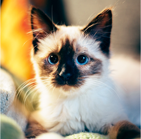 猫白血病、猫エイズのワクチンについて