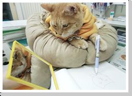 (1) 身体検査と先天異常チェック