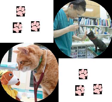 動物看護士さんを募集しています